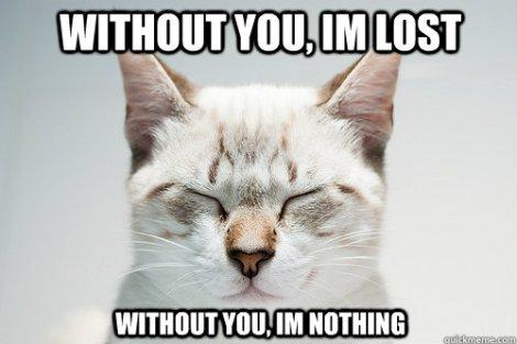 cat-meme-4