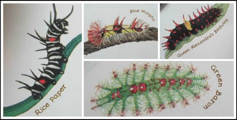 caterpillar favourites Collage