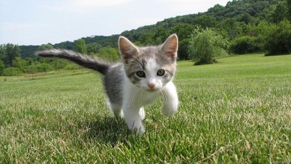 kitten-1246693_640